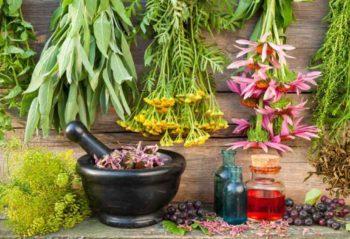 5 самых удобных лекарственных растений для сада и дачи